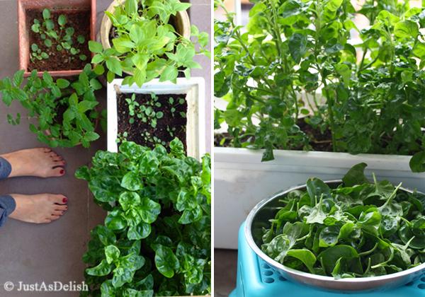 Shannon's Edible Balcony Garden
