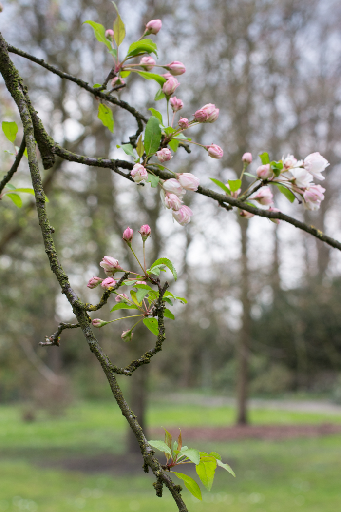 Spring1-1