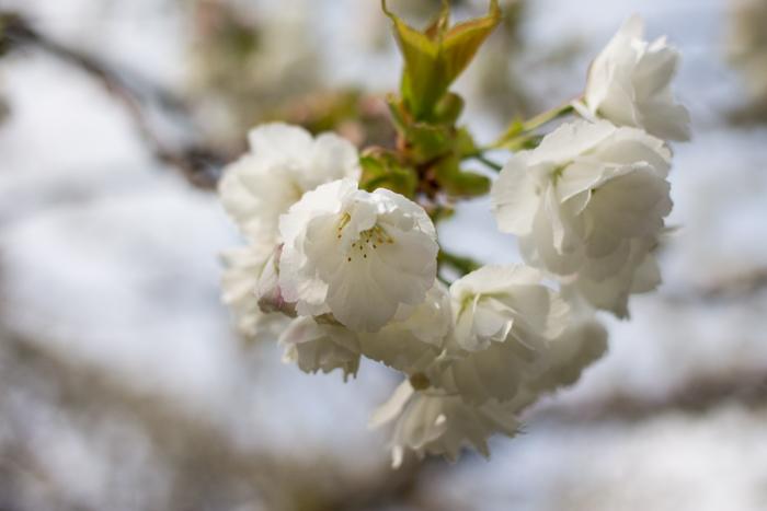 Spring1-5