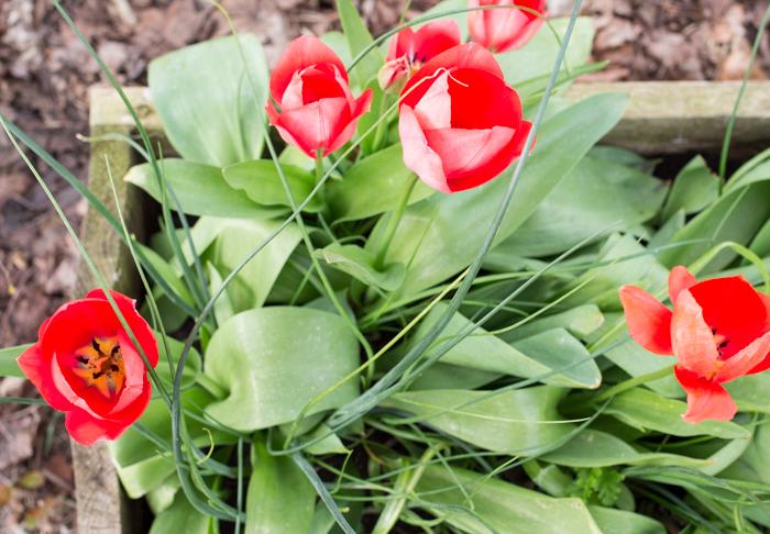 Spring10-1