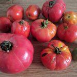 Gazpacho (Spanish Cold Tomato Soup)